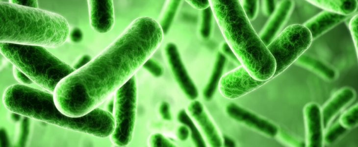 Bacteria Illustration- An image of bacteria