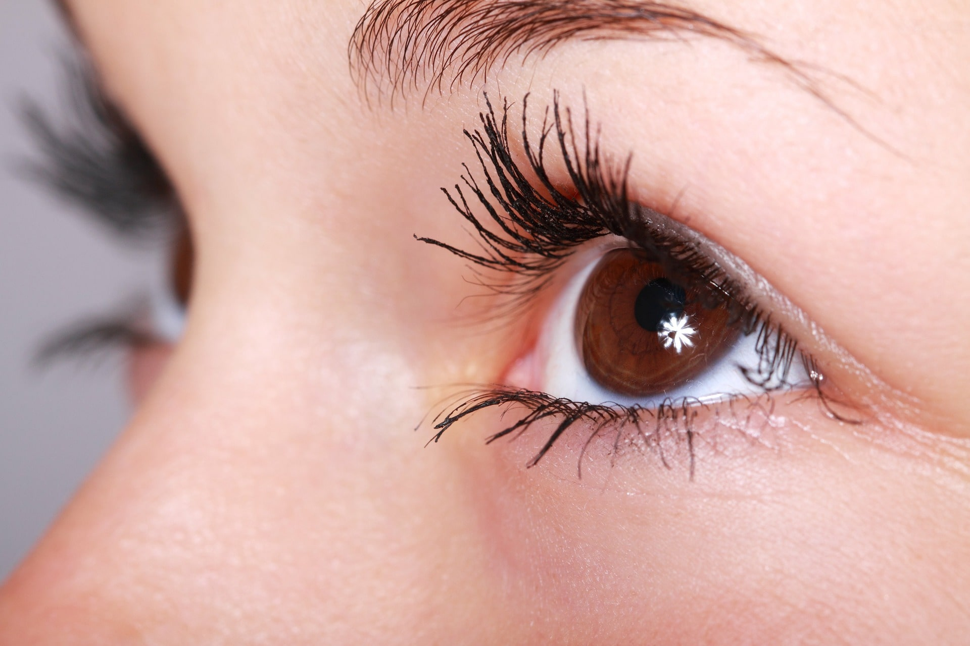 The eyes with long eyelash and brown color.