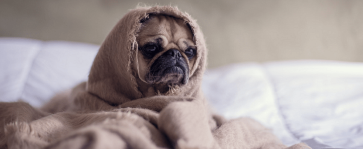 A dog covered by a cloth